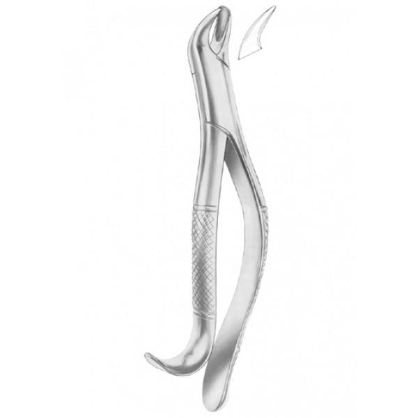 Fig 20 R  upper molar right (1240)