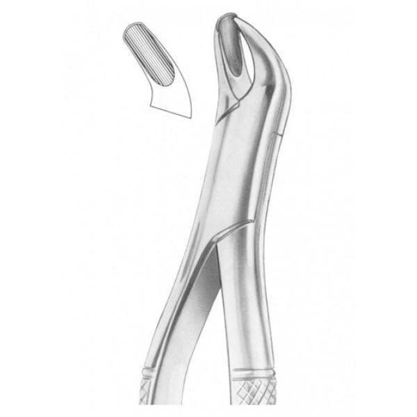 Fig 17. Upper molars RIGHT (1241)
